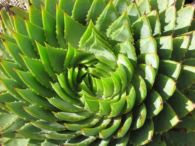 Pixabay_kaktus_design.jpg