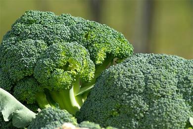 Biopatent Brokkoli