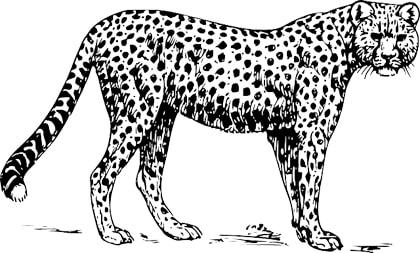 PUMA Katze