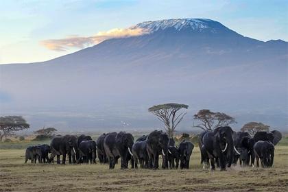 Zara wins against Zara Tanzania Adventure