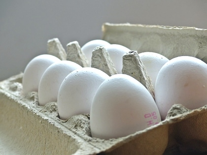 egg carton in patent nullity