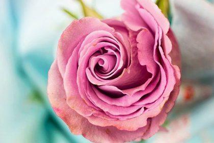 3D Unionsmarke Blume als beschreibend abgelehnt